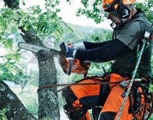 husqvarna-chainsaw