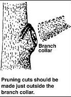 pruning-young-trees