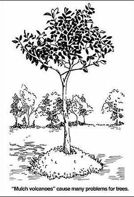 tree-mulching-2